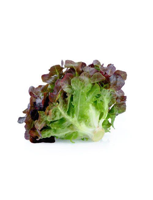 salade-rougette-legume-nicolas-durand-producteur-local-gard