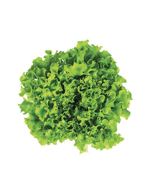 salade-batavia-nicolas-durand