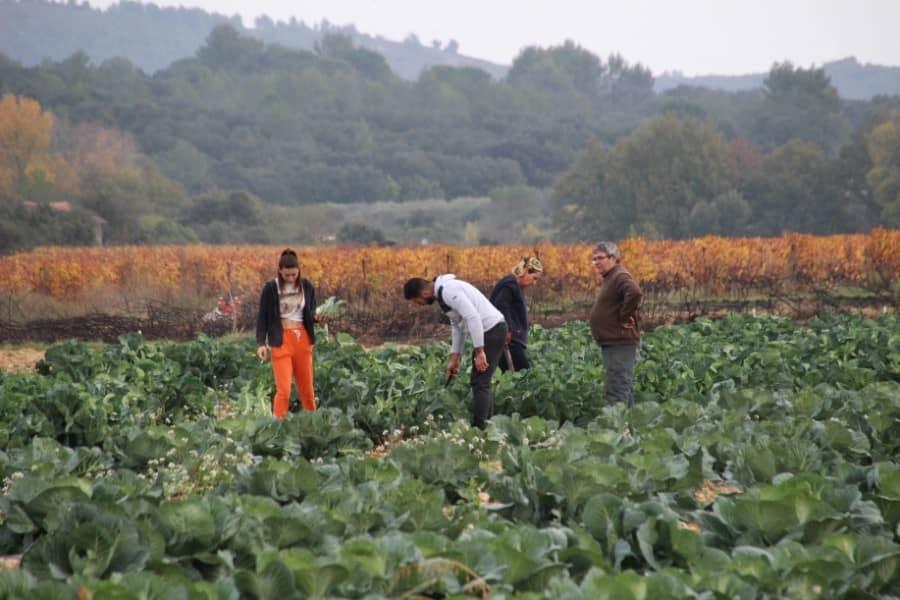 Producteurs locaux dans un champ