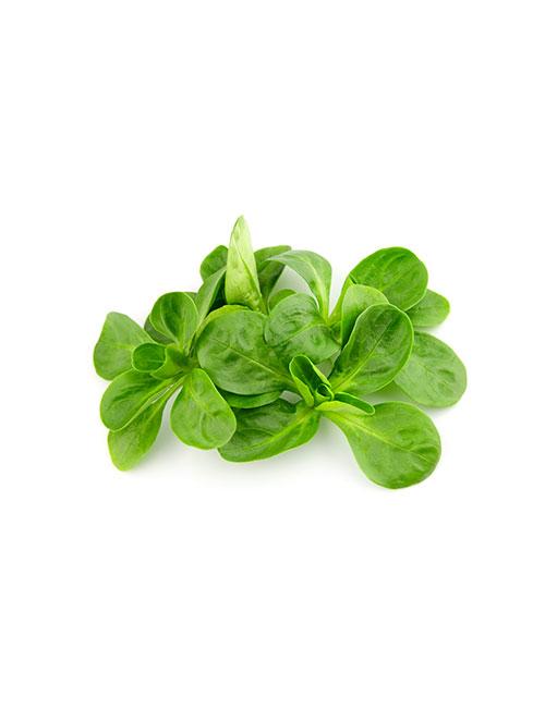 salade-mache-legume-nicolas-durand-ales-gard